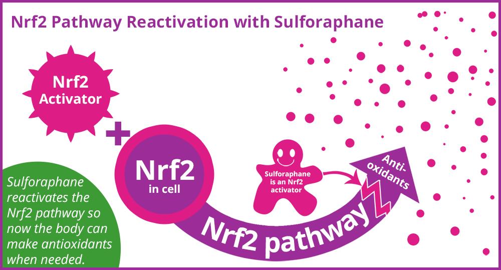 Nrf2 pathway