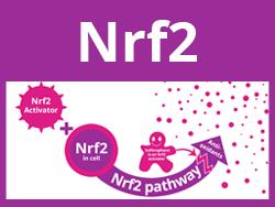 Sulforaphane Activates Nrf2